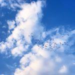 سرود پرواز تا روشنایی