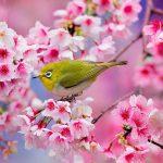 سرود زیباتر از شکوفه