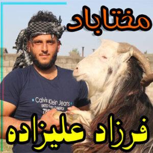 فرزاد علیزاده مختاباد